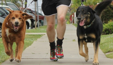 Runners and Dogs